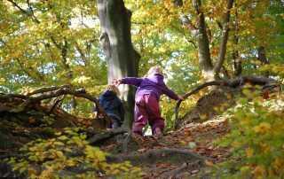 waldkindergarten albert schweitzer familienwerk bayern